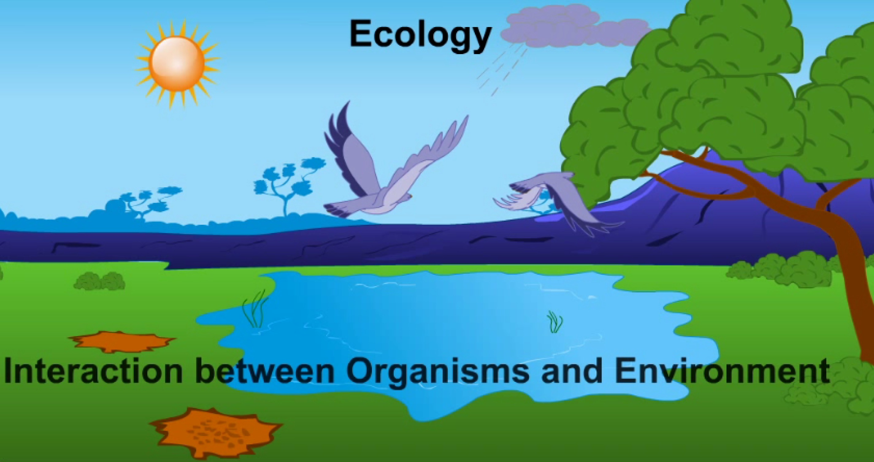 54e8aa857bf577636af3ac88_Behavioral.Ecology1.Ecology.and.Environment.jpg
